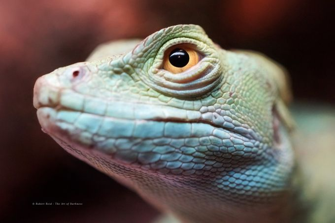 """Gojira"" by The-Art-of-Darkness - Reptiles Photo Contest"