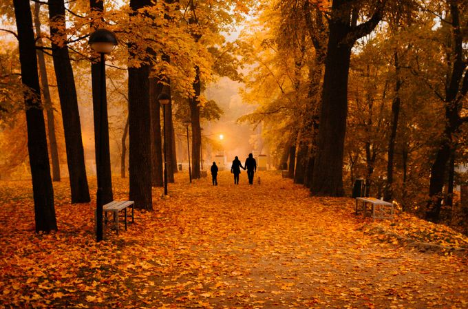 family in misty park by jorma - Bright And Colorful Photo Contest