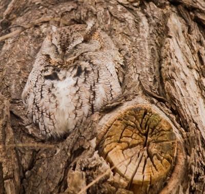 Snug as a bug...in a tree
