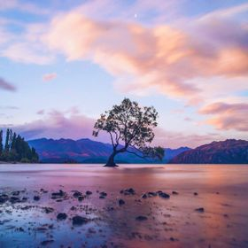 3rd time lucky trying to get some nice colours at That Wanaka Tree