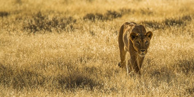 Huntress by corymarshall - Can You See Me Photo Contest
