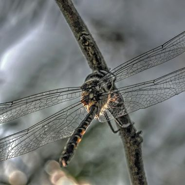 Dragon Fly (3)