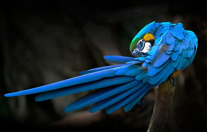 IMG_9976 by abbasaliamir - A World Of Blue Photo Contest