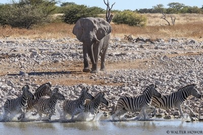 Who's the King of This Water Hole