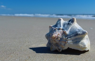 The Lonely Shell