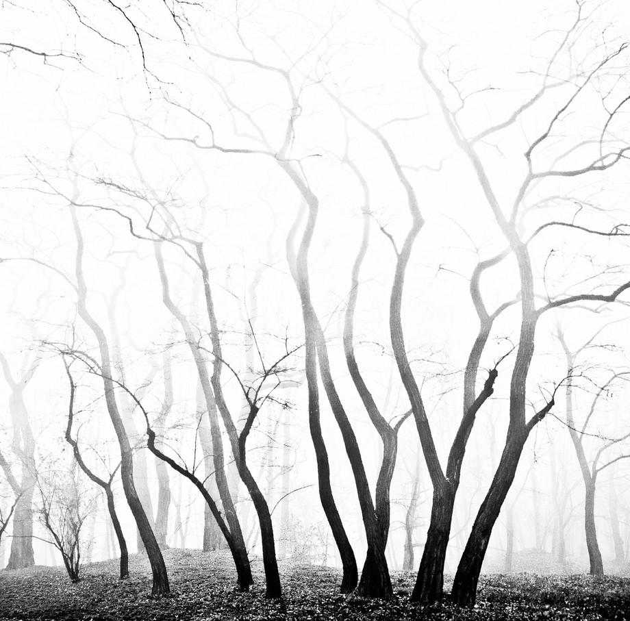forest veins