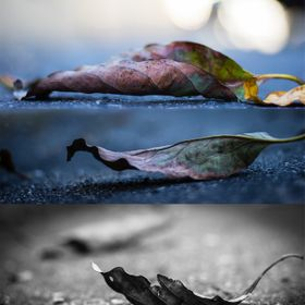 Stuck in a parking lot waiting for my mom. Saw some leaves on the ground where I parked. Shot away, people leaving the lot were looking at me tak...
