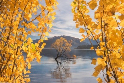 Autumn's curtains