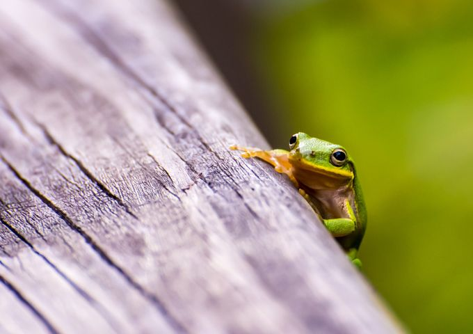 Tree Frog in the Park by GabrielCarlsonCreations - Show Minimalism Photo Contest