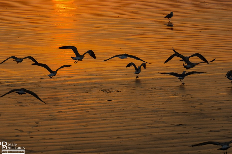 They flew away into sunset as i clicked the beauties !
