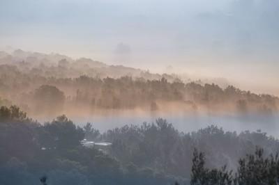 niebla en los campos