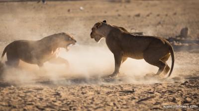 Female fighting