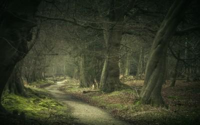 Ashridge Winter's Morning