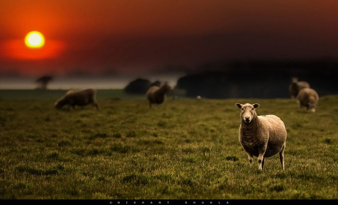 Dying Light by Nishant-101 - Farms And Barns Animals Photo Contest