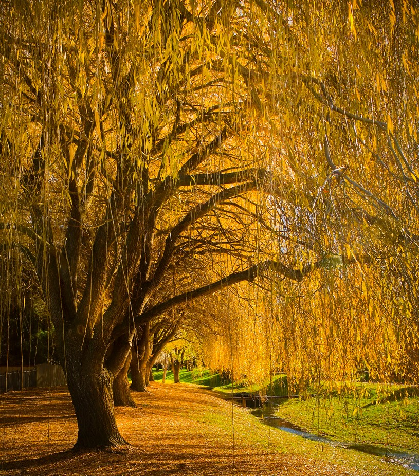 under the willows by imagesbyvanja - Fall 2016 Photo Contest