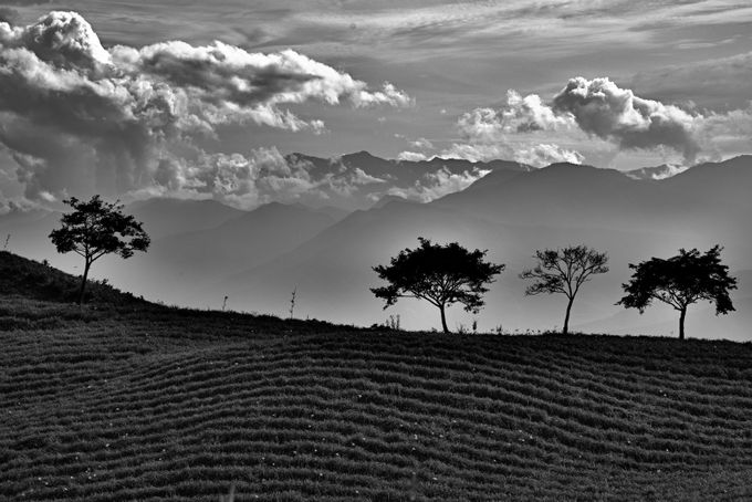 Tree Shapes by awoisoak - Silhouettes Of Trees Photo Contest