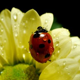 ... a ladybug just took a shower