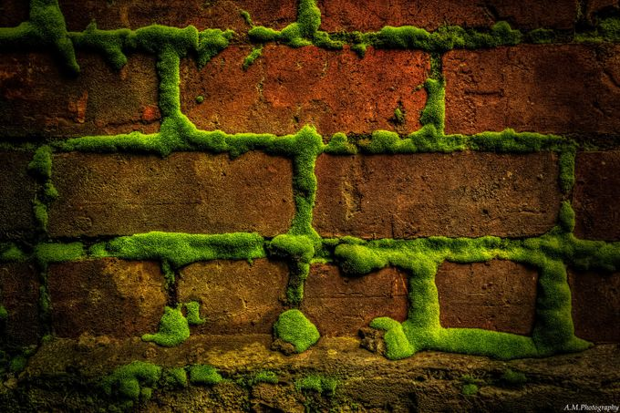 Brick in the Wall. by AaronM - Composing with Patterns Photo Contest