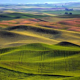 The rhythms, textures, and ever-changing colors of the Palouse landscape reminds me of jazz. Smooth jazz. Endless variations on a captivating the...