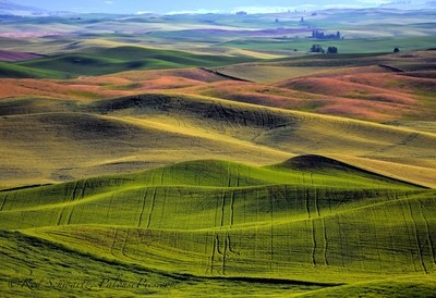 Palouse Jazz Tracks