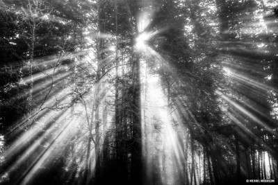 Beams of Light Coming Through The Trees