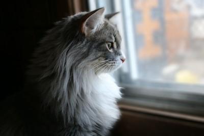 Glaring through the window