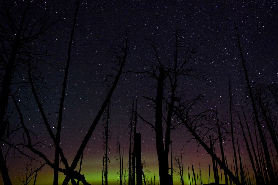 The aurora borealis lights up the northern sky in Yellowstone National Park.
