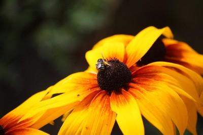 Sunshine Buzz