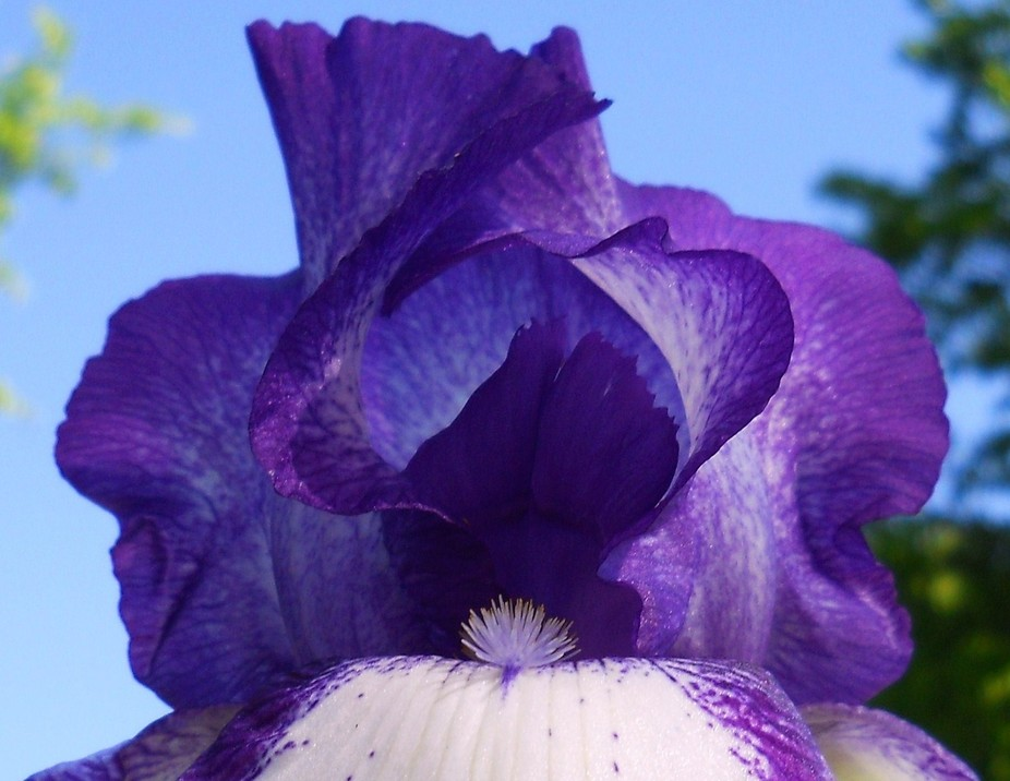 The iris flowers are from a photo shoot I did five years ago on a perfect spring day.  Can you im...