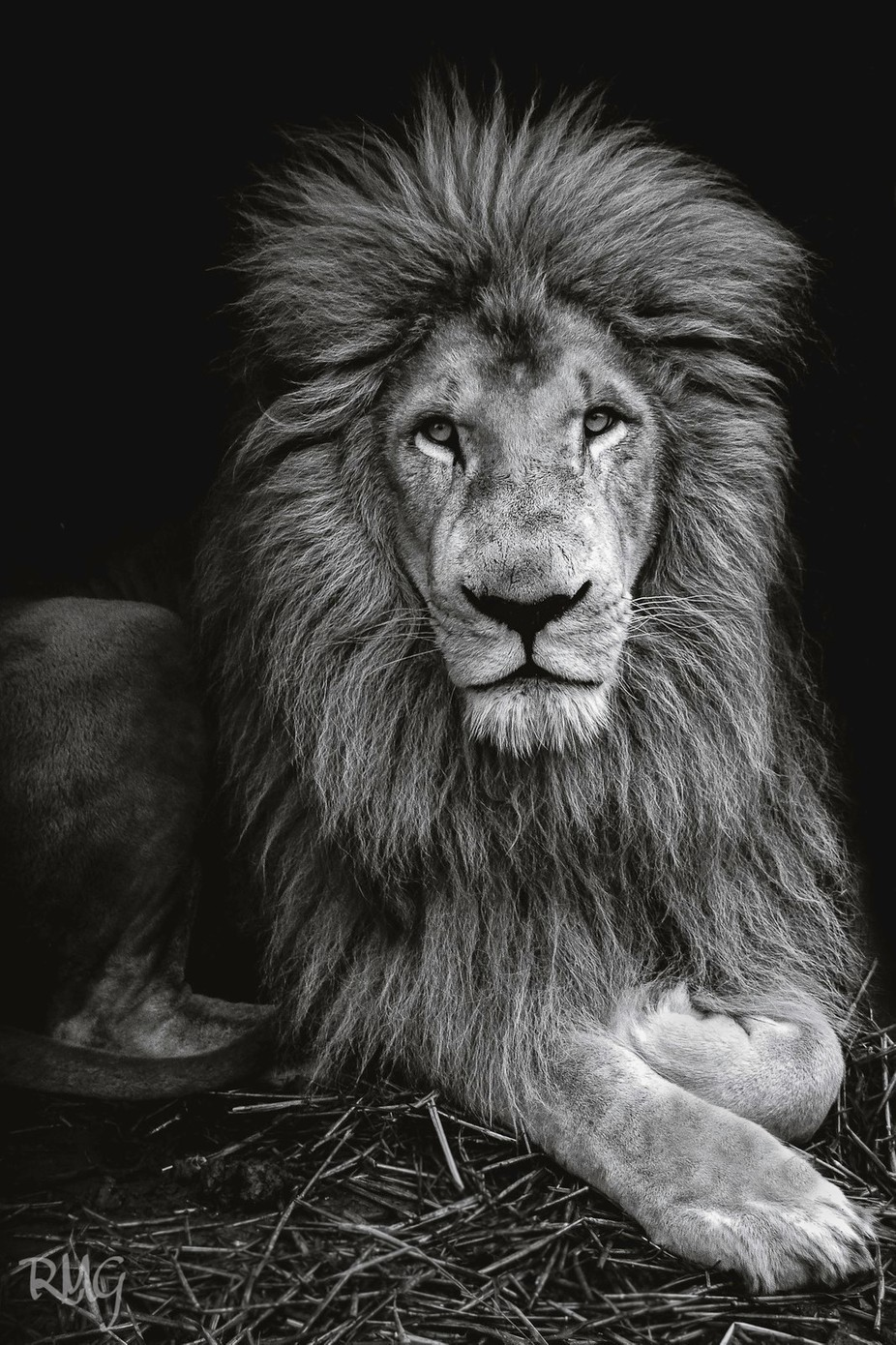 Lion by radekgora - A Black And White World Photo Contest