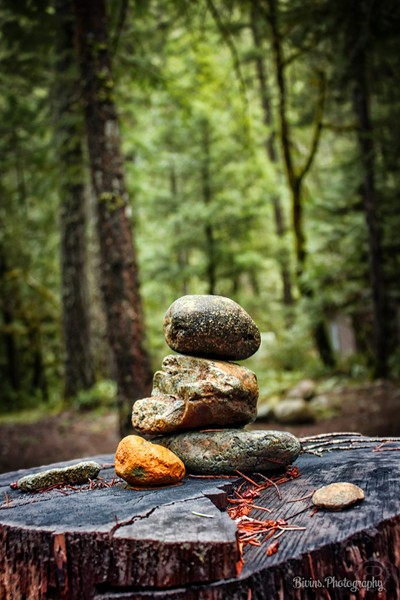 Balance_in_the_forest