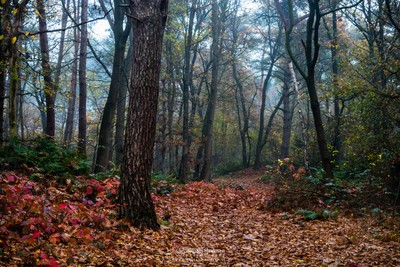 Forest Bridle Path