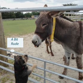 visiting the donkey sanctuary near Beer in Devon, Bertie was fascinated by these creatures he had not seen before, one stuck its tongue out. I th...