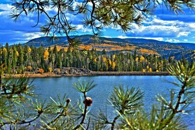 Pines at the lake