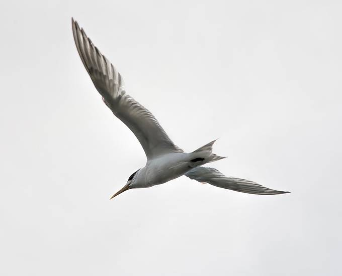 Whilst fishing a family of Terns dived for small fish.