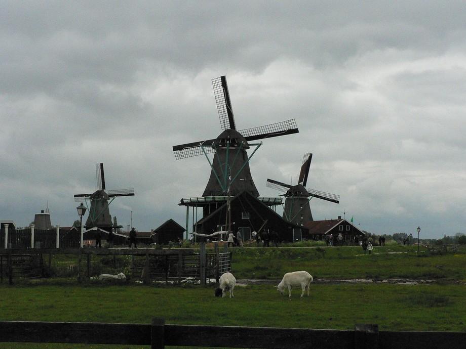 Zaanse Schans Windmills and Goats May 2010