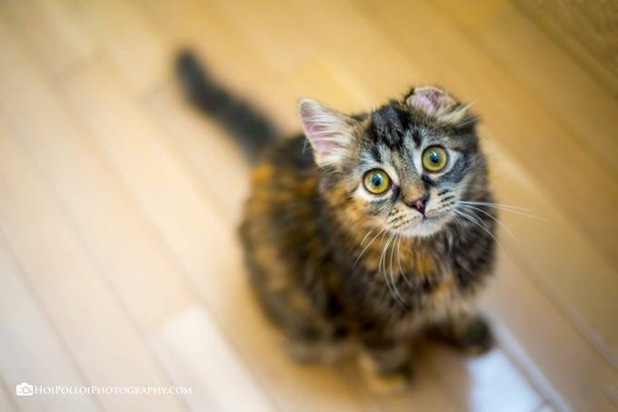 Gracie by Merma1d - Cute Kittens Photo Contest