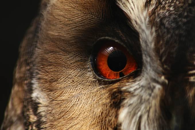 Sad owl by Jan_Zajc - Beautiful Owls Photo Contest