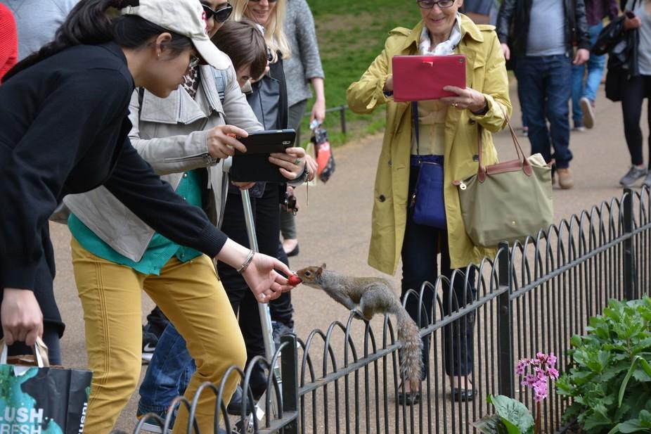 Captured this shot at st james park, london , UK