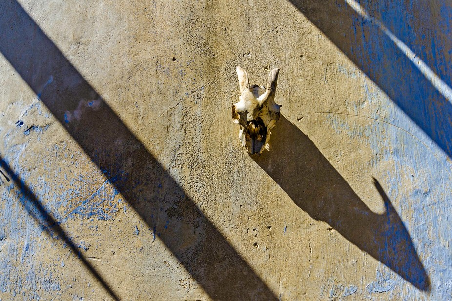 A goat skull hanging on a wall in a derelict cortijo near Sorbas, Almeria, Spain
