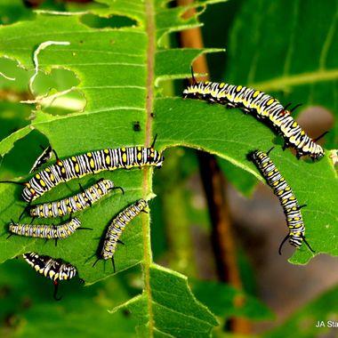 macro of bug life