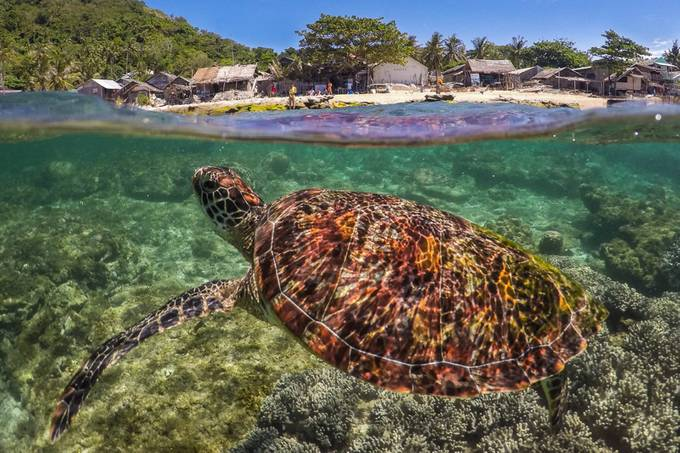 Hawksbill sea turtle by NZEXPOSED_Photography - Get Wet Photo Contest