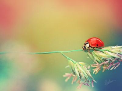 A Ladybug's Life