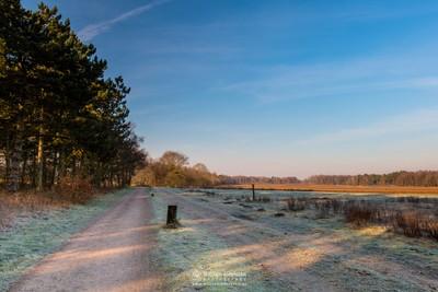 Sunny Frosty Morning