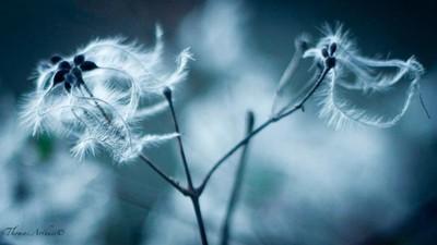 FLOWER DANCING ©Thomas-Arthuis©