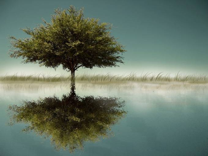 tree by vincefallert - Lakes And Reflections Photo Contest