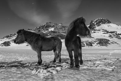 iceland_ponies_kalfatellsstadhur_060