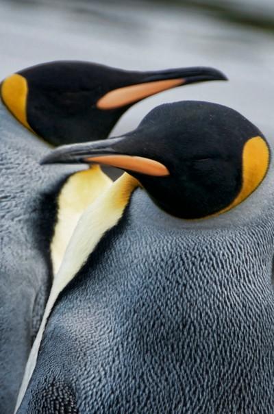 Antarctica Mates