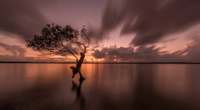 lonely tree  by Feeko77 - Silhouettes Of Trees Photo Contest