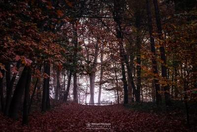 Misty Autumn Silhouettes